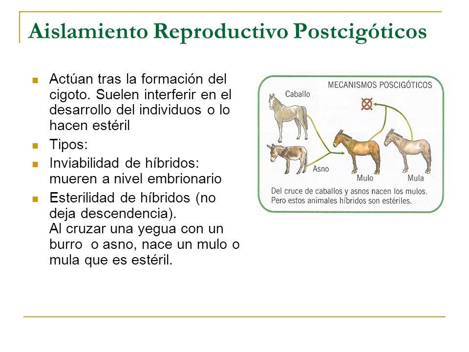 Aislamiento Reproductivo Postcigóticos