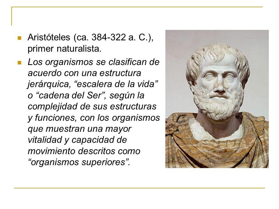 Aristóteles (ca. 384-322 a. C.), primer naturalista.