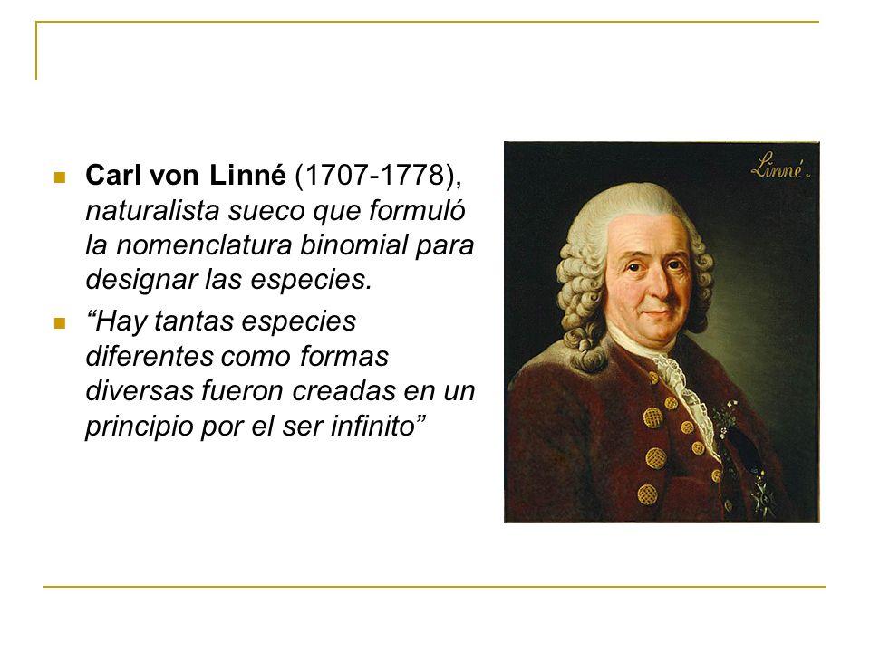 Carl von Linné (1707-1778), naturalista sueco que formuló la nomenclatura binomial para designar las especies.