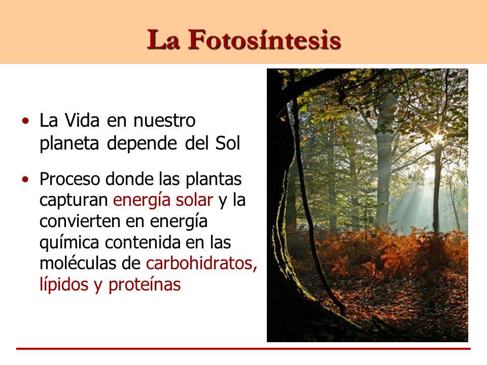 La Fotosíntesis La Vida en nuestro planeta depende del Sol
