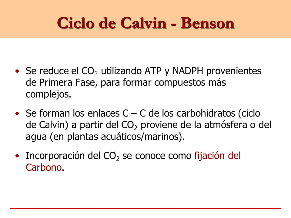Ciclo de Calvin - Benson