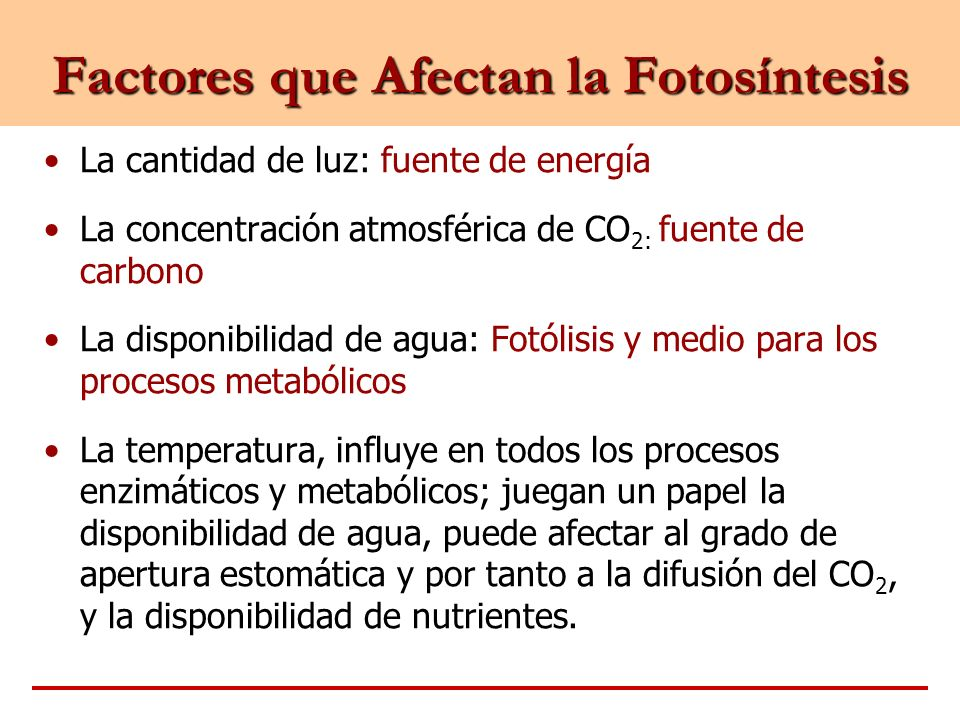 Factores que Afectan la Fotosíntesis