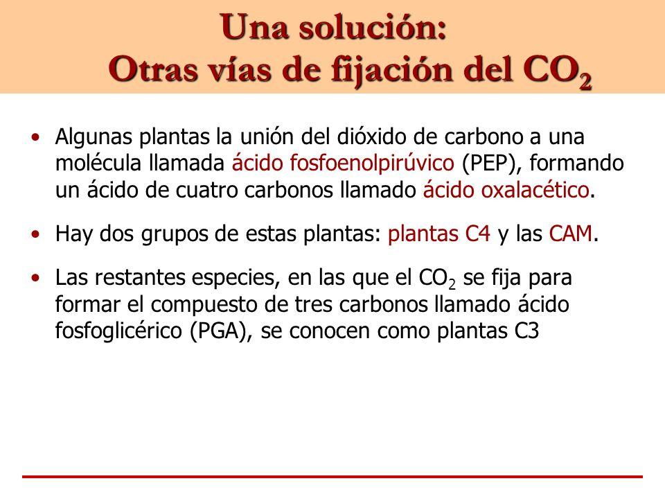 Una solución: Otras vías de fijación del CO2