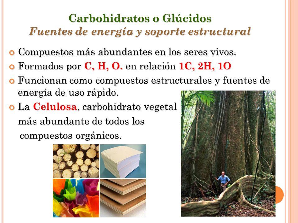 Carbohidratos o Glúcidos Fuentes de energía y soporte estructural