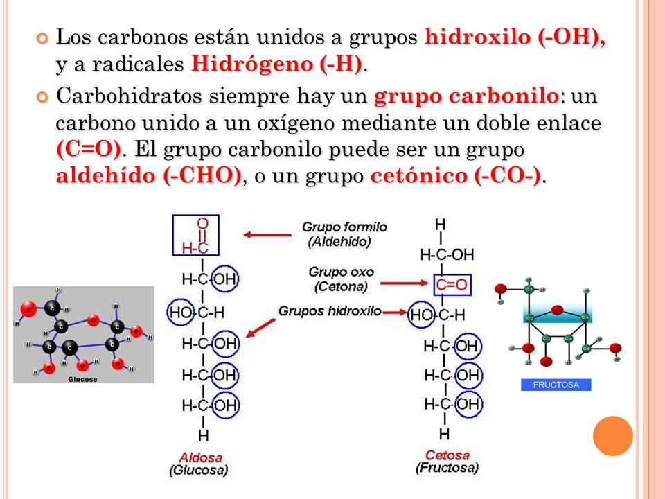 Los carbonos están unidos a grupos hidroxilo (-OH), y a radicales Hidrógeno (-H).