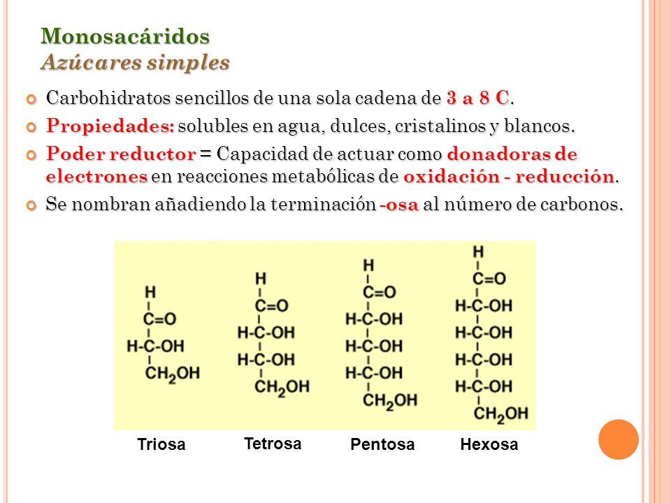 Monosacáridos Azúcares simples