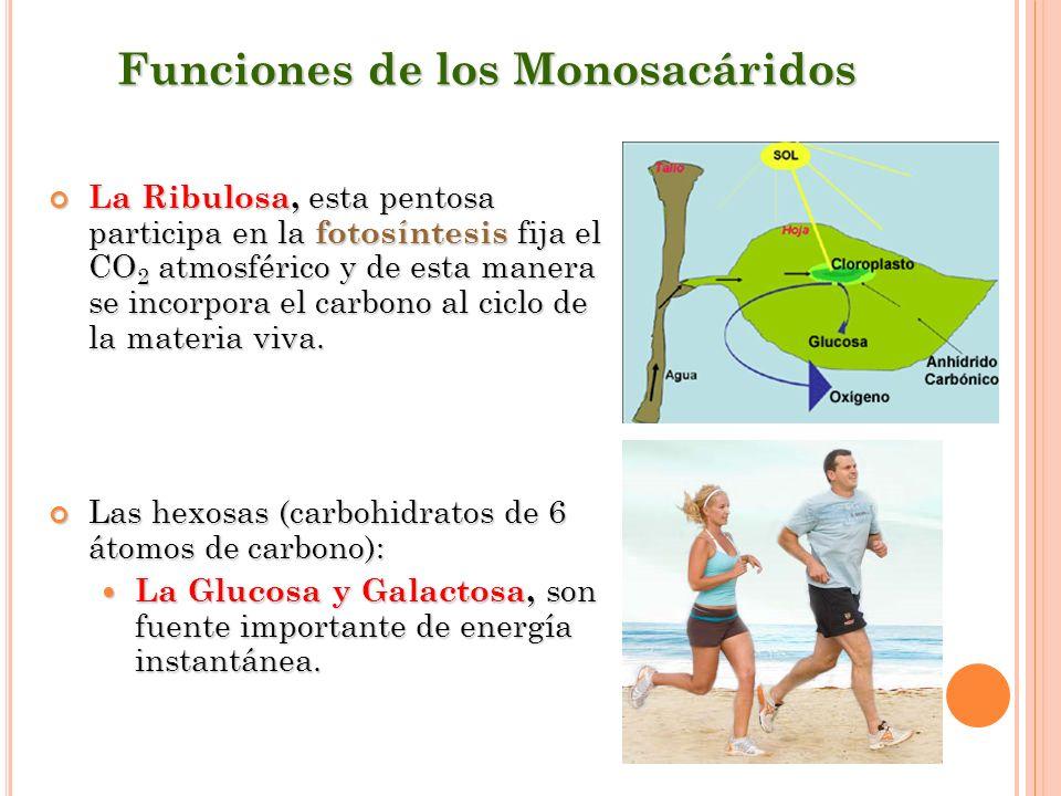 Funciones de los Monosacáridos