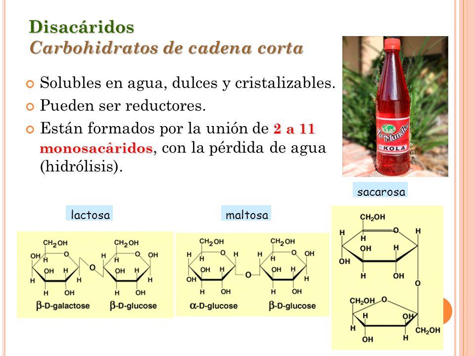 Disacáridos Carbohidratos de cadena corta