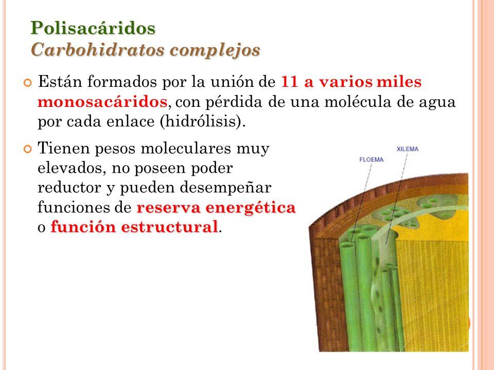 Polisacáridos Carbohidratos complejos