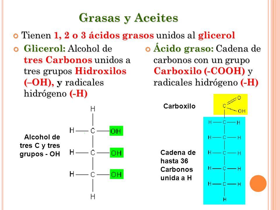 Grasas y Aceites Tienen 1, 2 o 3 ácidos grasos unidos al glicerol