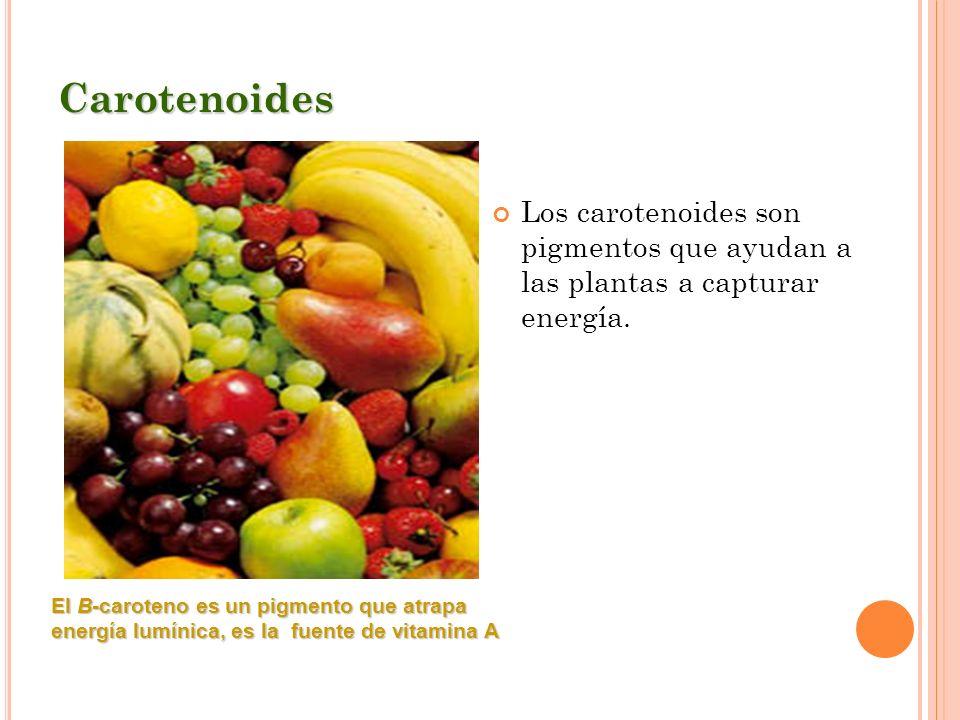 Carotenoides Los carotenoides son pigmentos que ayudan a las plantas a capturar energía.