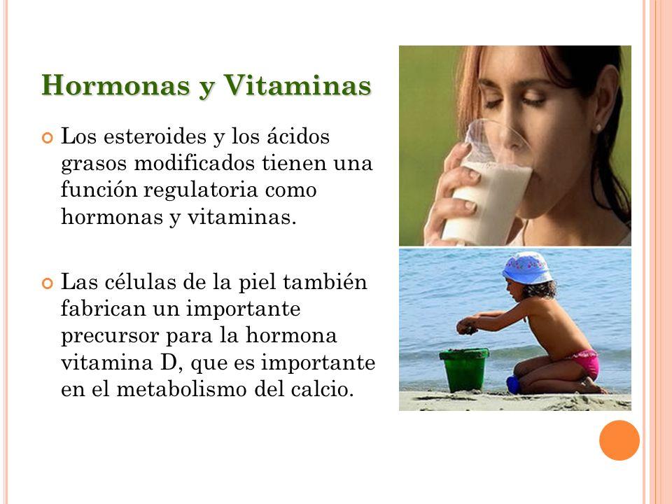 Hormonas y VitaminasLos esteroides y los ácidos grasos modificados tienen una función regulatoria como hormonas y vitaminas.