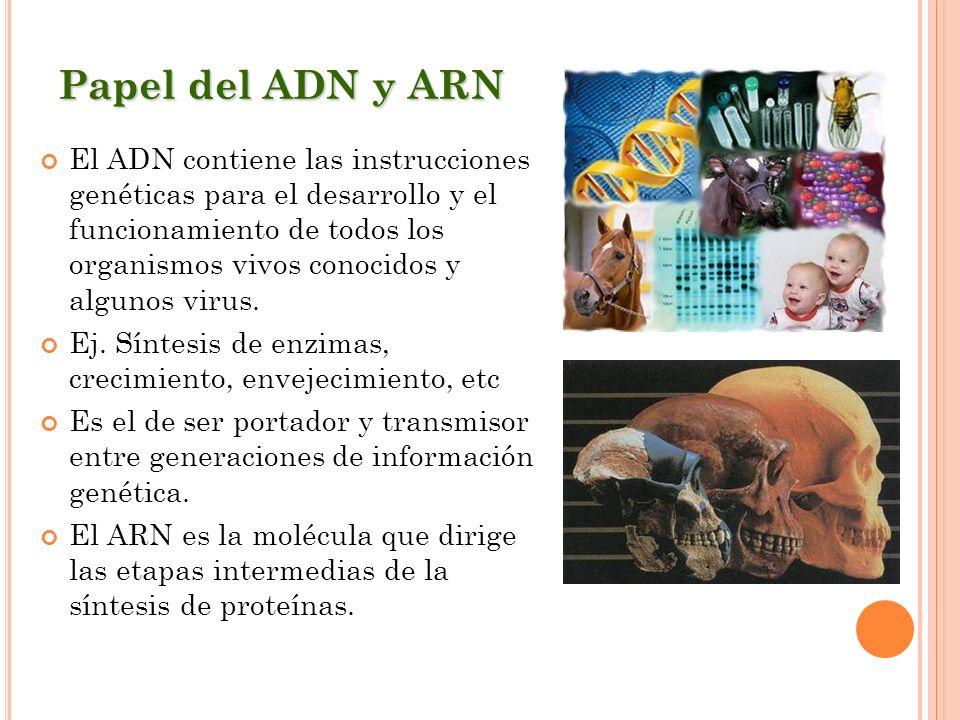 Papel del ADN y ARN