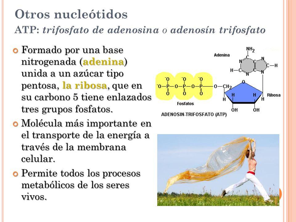 Otros nucleótidos ATP: trifosfato de adenosina o adenosín trifosfato