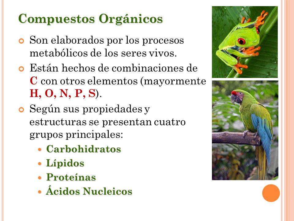 Compuestos OrgánicosSon elaborados por los procesos metabólicos de los seres vivos.