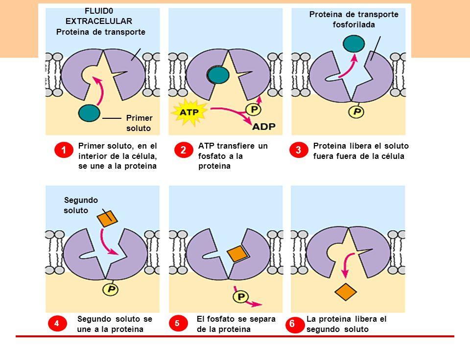 Proteína de transporte Proteína de transporte fosforilada