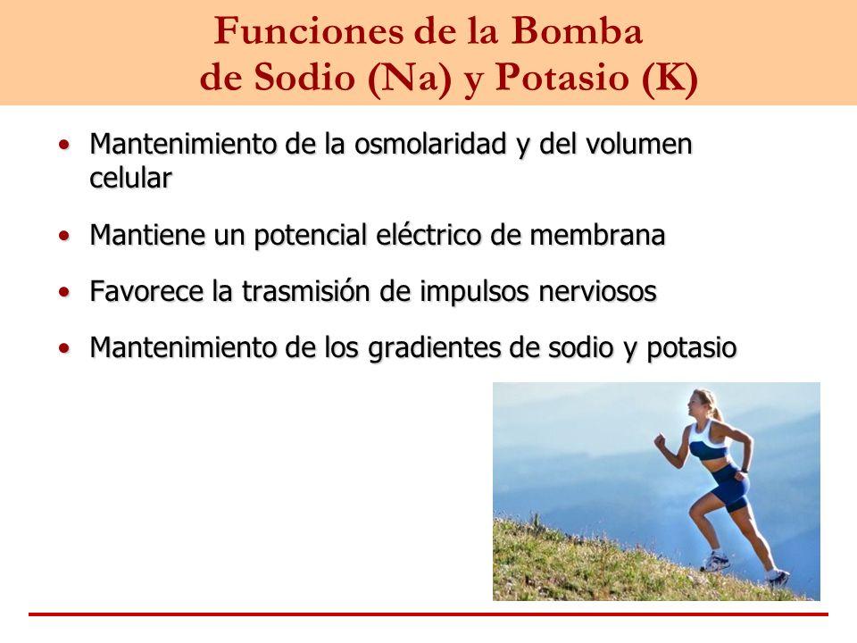 Funciones de la Bomba de Sodio (Na) y Potasio (K)