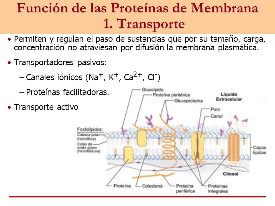Función de las Proteínas de Membrana 1. Transporte