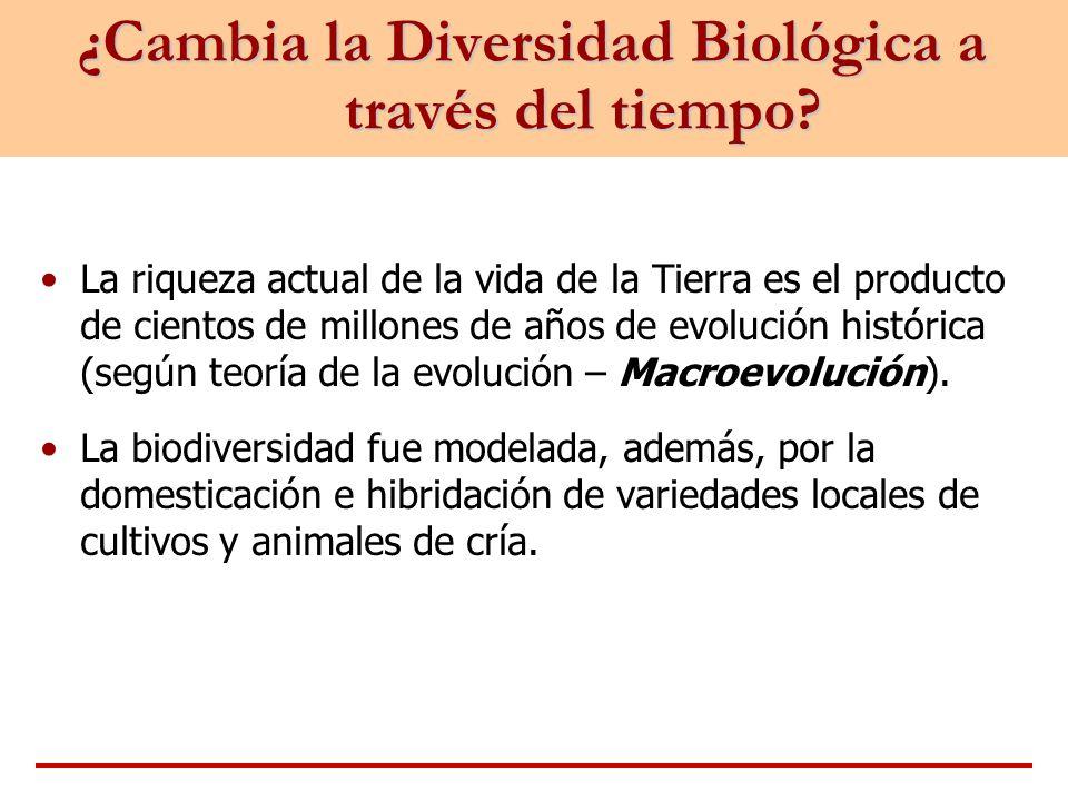 ¿Cambia la Diversidad Biológica a través del tiempo