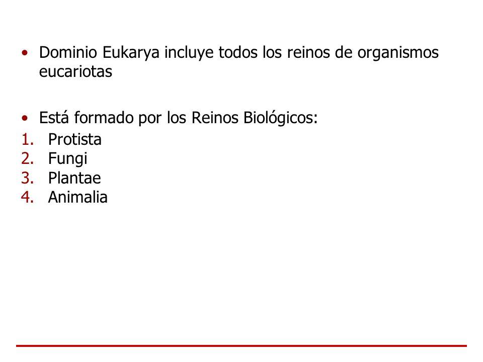 Dominio Eukarya incluye todos los reinos de organismos eucariotas