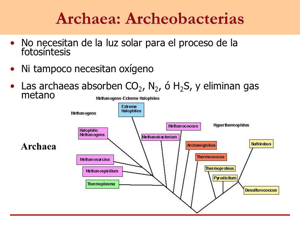 Archaea: Archeobacterias