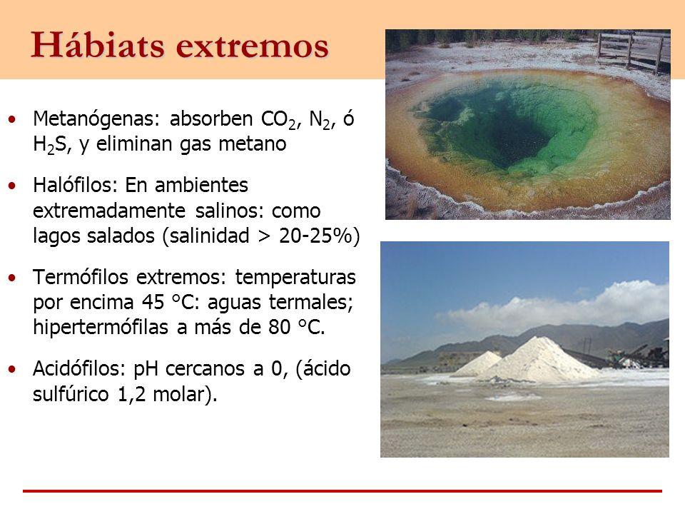 Hábiats extremos Metanógenas: absorben CO2, N2, ó H2S, y eliminan gas metano.