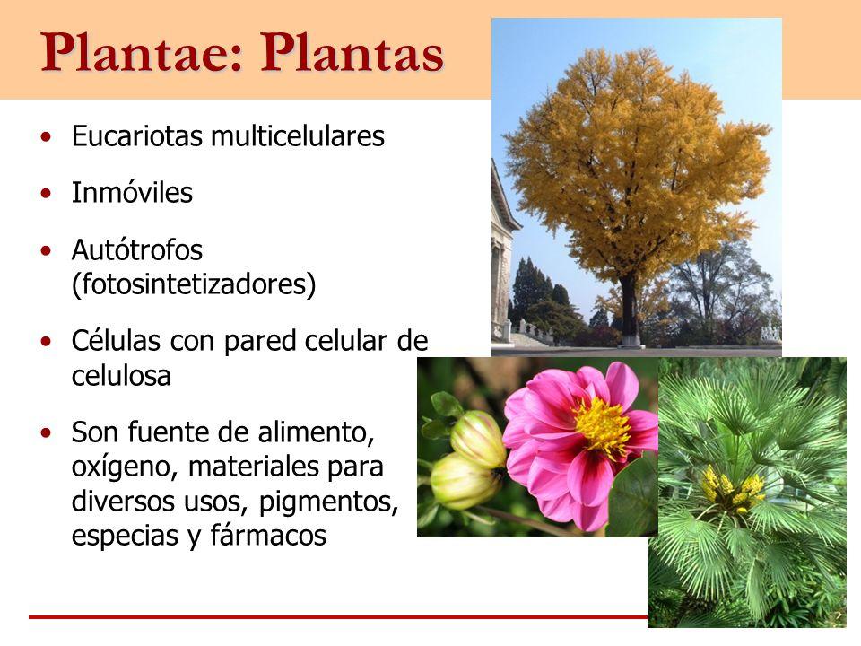 Plantae: Plantas Eucariotas multicelulares Inmóviles
