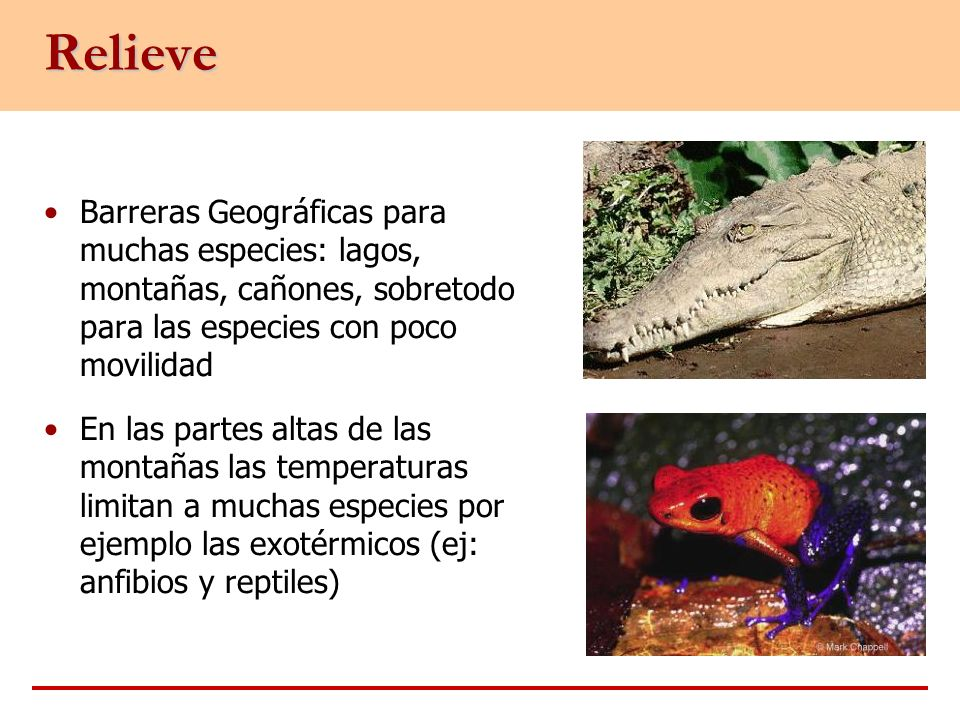 Relieve Barreras Geográficas para muchas especies: lagos, montañas, cañones, sobretodo para las especies con poco movilidad.