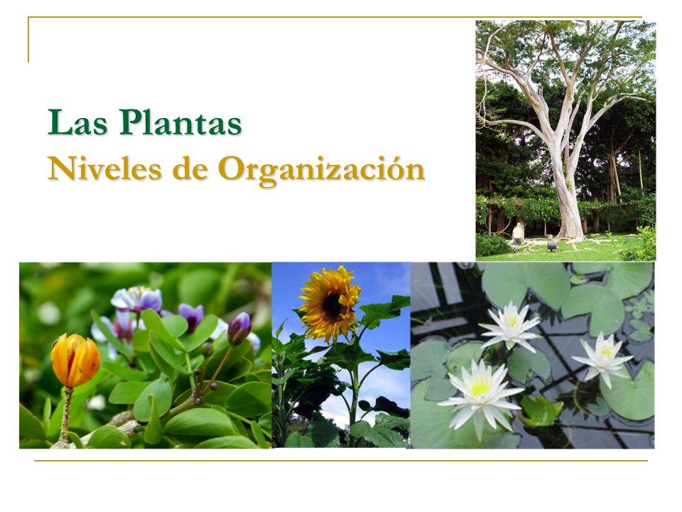 Las Plantas Niveles de Organización