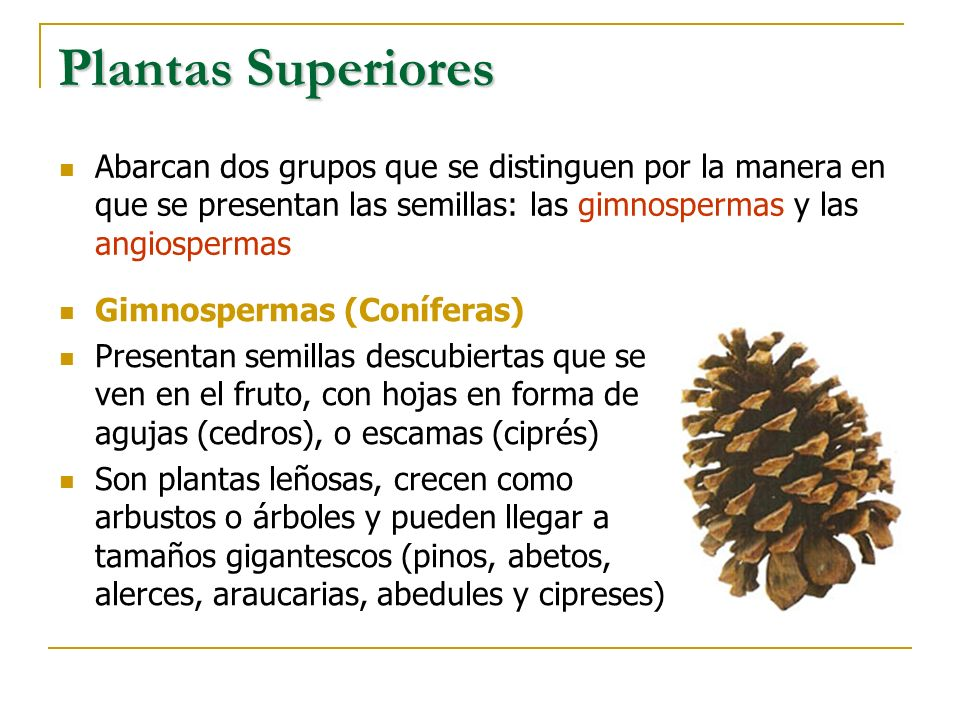 Plantas SuperioresAbarcan dos grupos que se distinguen por la manera en que se presentan las semillas: las gimnospermas y las angiospermas.