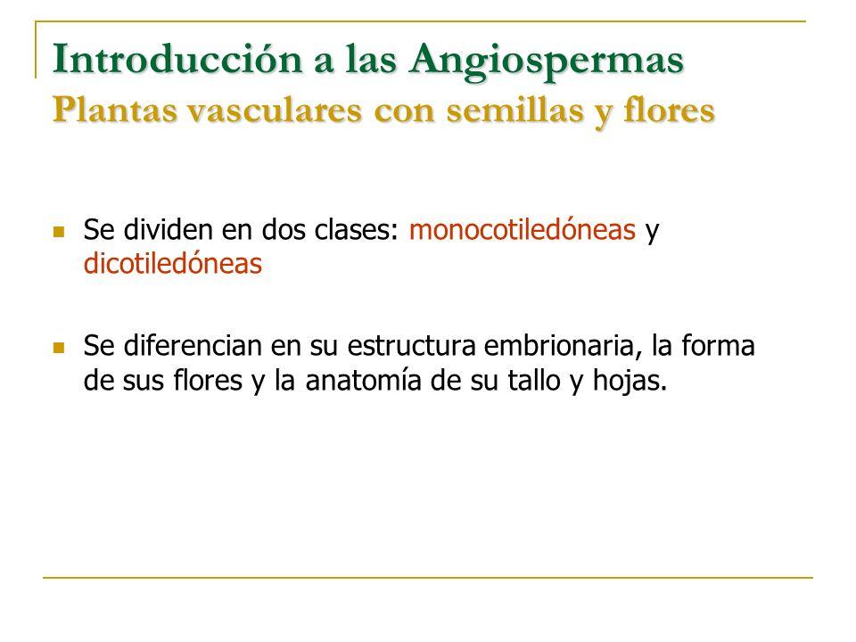 Introducción a las Angiospermas Plantas vasculares con semillas y flores