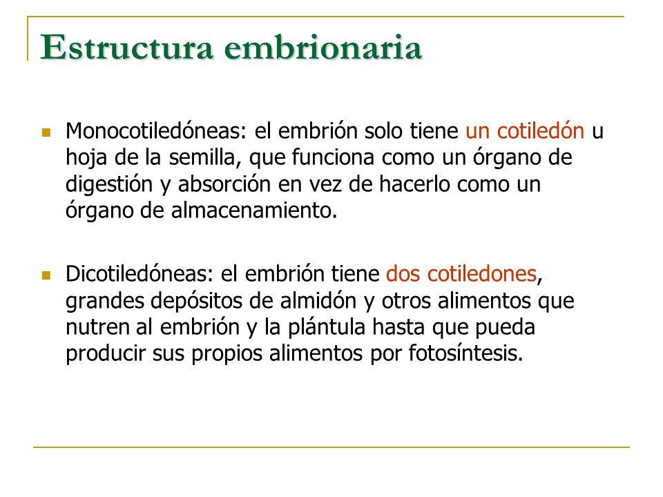 Estructura embrionaria