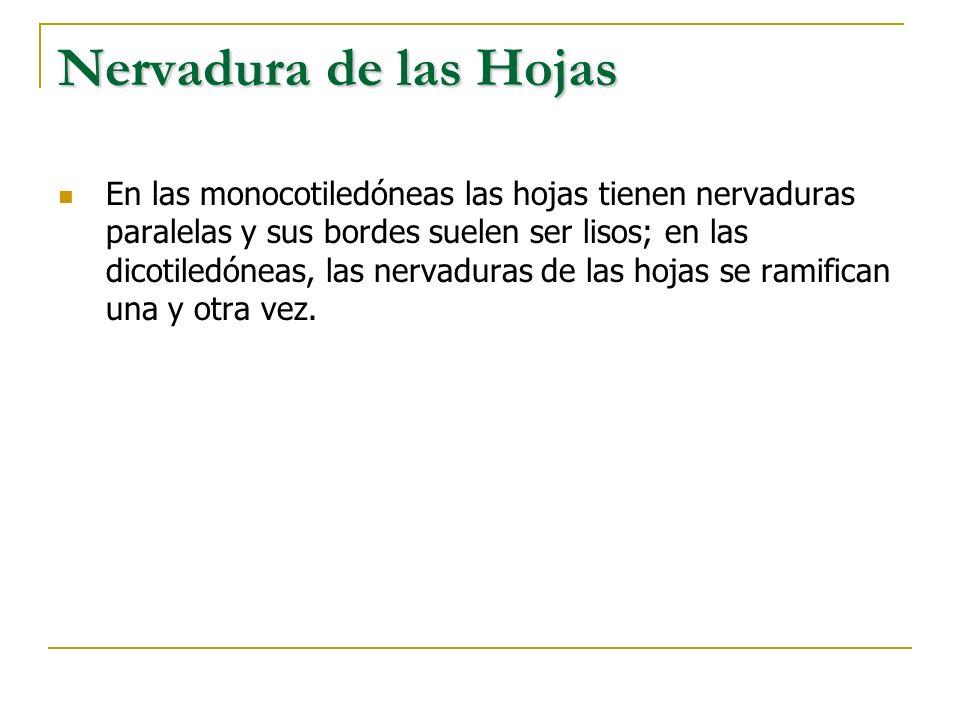Nervadura de las Hojas
