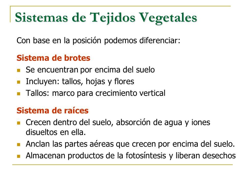 Sistemas de Tejidos Vegetales