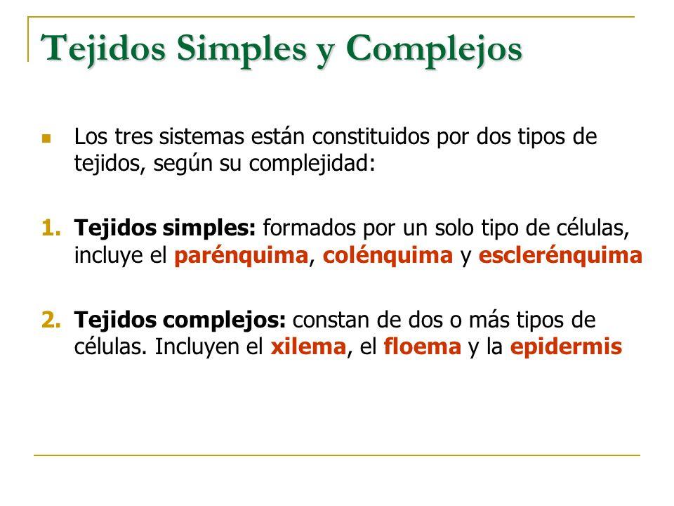 Tejidos Simples y Complejos