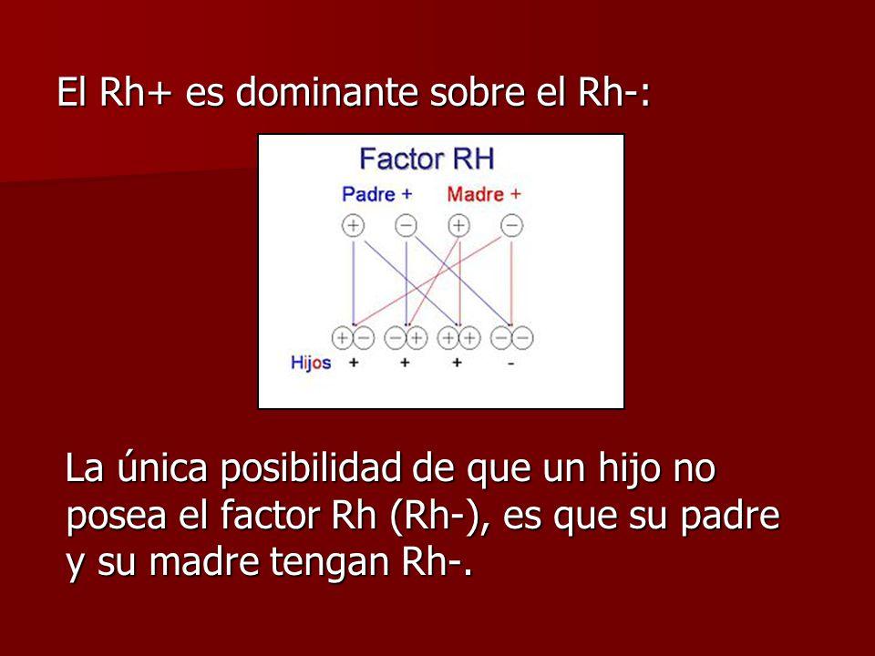 El Rh+ es dominante sobre el Rh-: