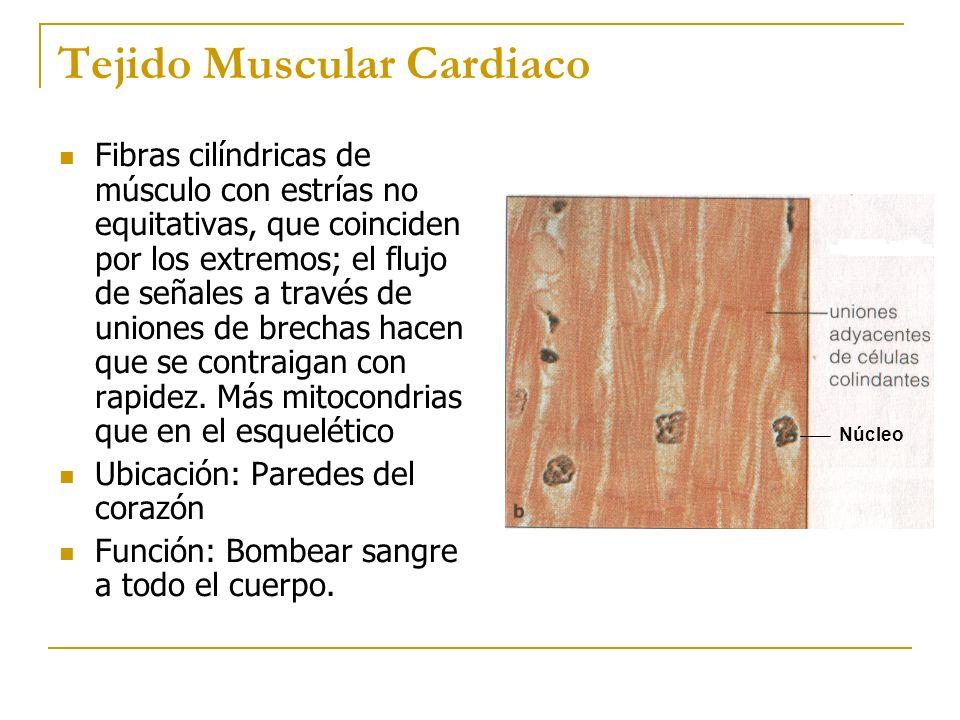 Tejido Muscular Cardiaco