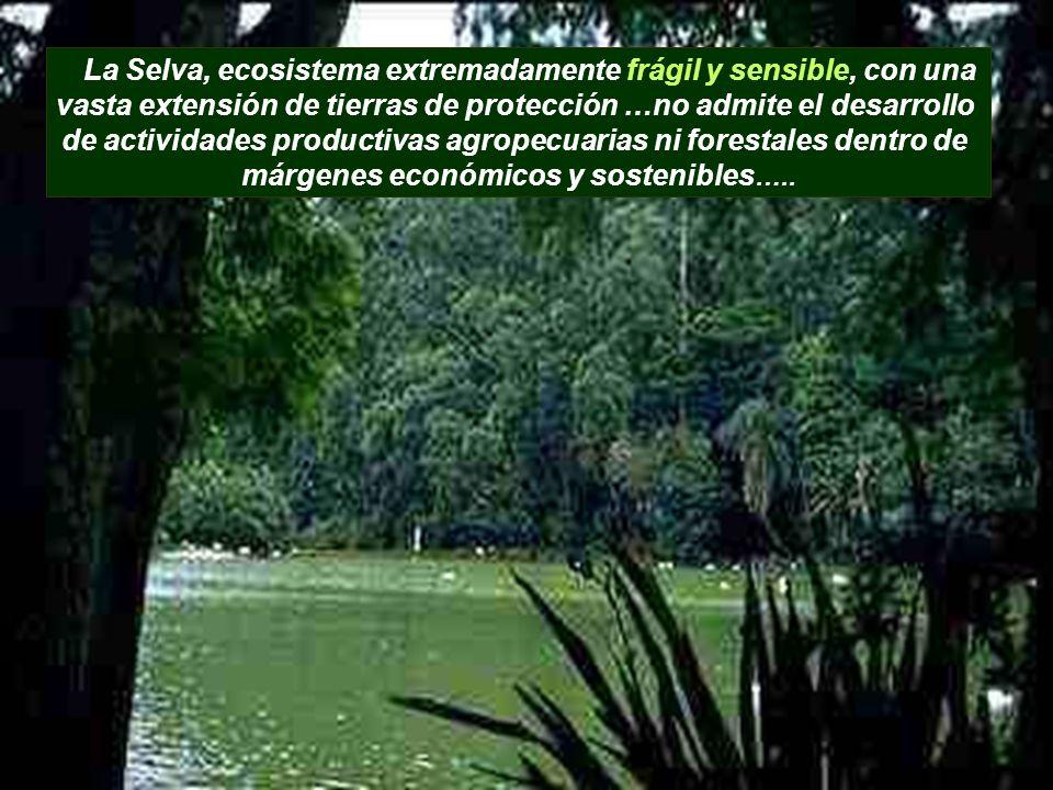 vasta extensión de tierras de protección …no admite el desarrollo