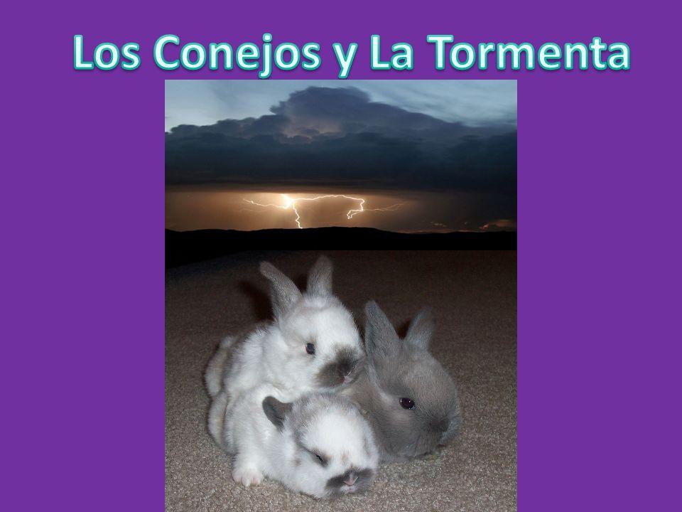 Los Conejos y La Tormenta