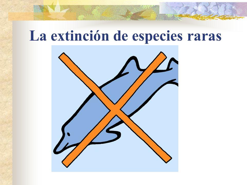 La extinción de especies raras