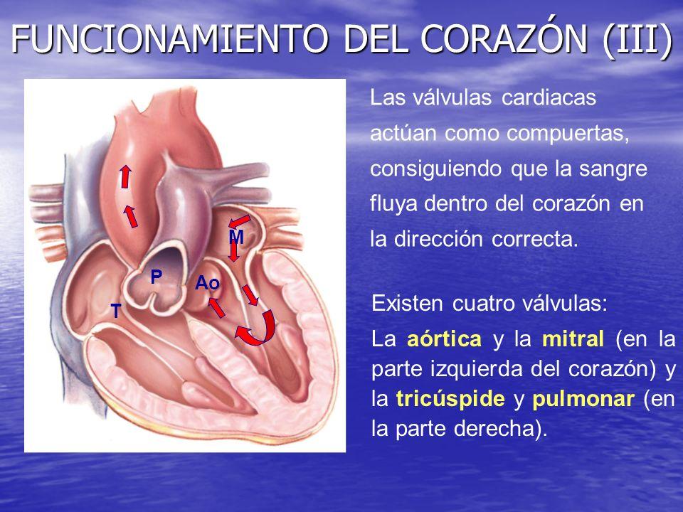 FUNCIONAMIENTO DEL CORAZÓN (III)