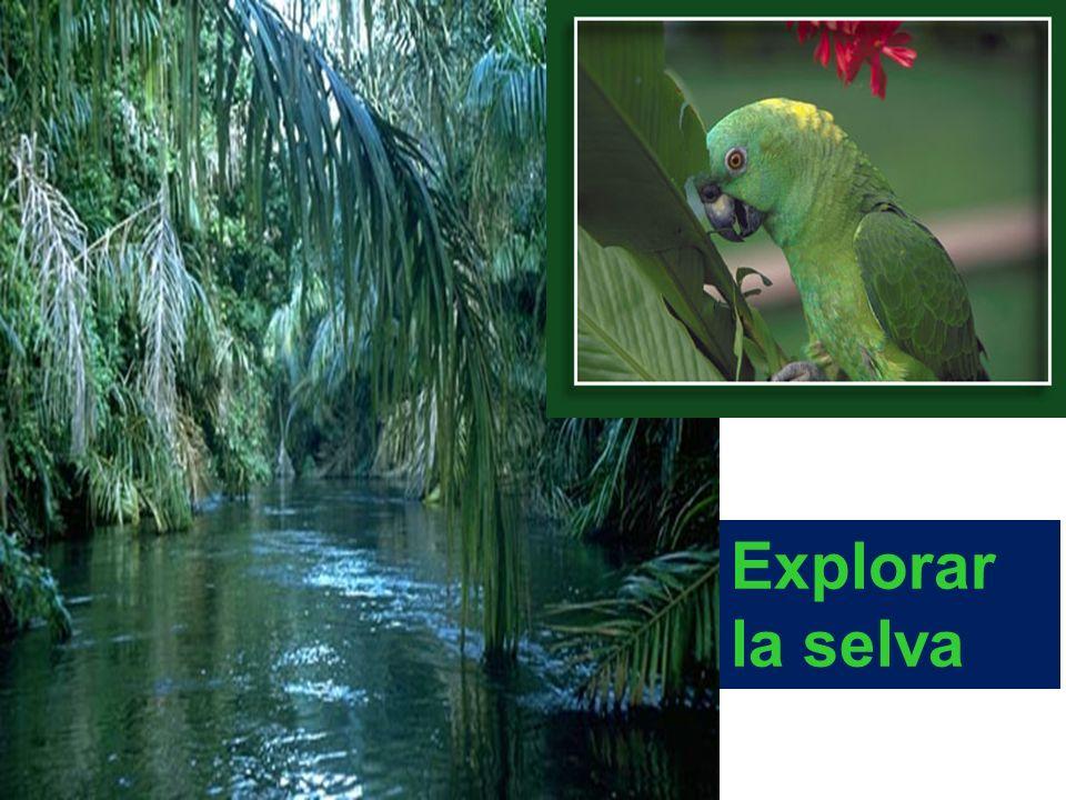 Explorar la selva