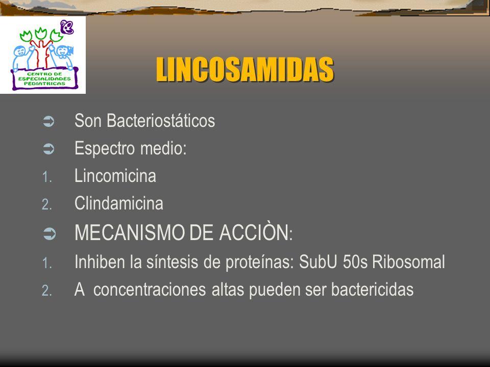 LINCOSAMIDAS MECANISMO DE ACCIÒN: Son Bacteriostáticos Espectro medio: