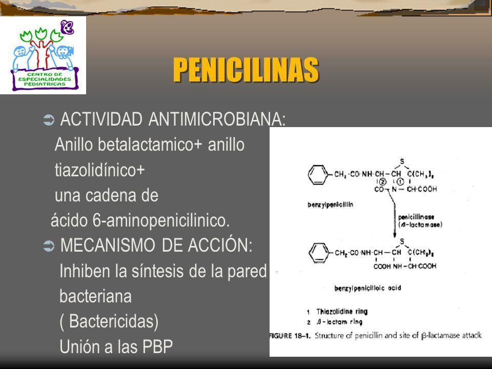 PENICILINAS ACTIVIDAD ANTIMICROBIANA: Anillo betalactamico+ anillo