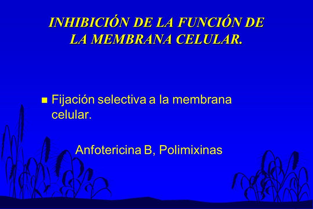 INHIBICIÓN DE LA FUNCIÓN DE LA MEMBRANA CELULAR.