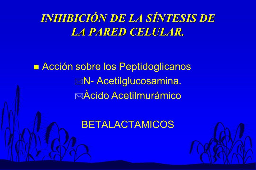 INHIBICIÓN DE LA SÍNTESIS DE LA PARED CELULAR.