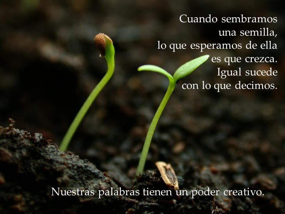 Cuando sembramos una semilla, lo que esperamos de ella. es que crezca. Igual sucede. con lo que decimos.