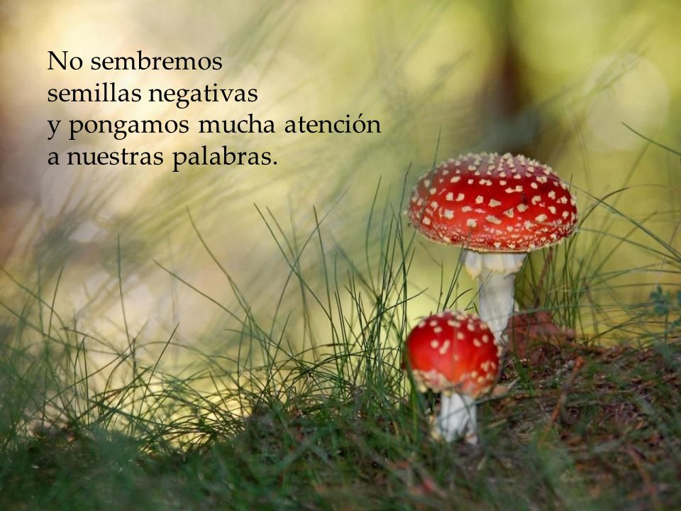 No sembremos semillas negativas y pongamos mucha atención a nuestras palabras.