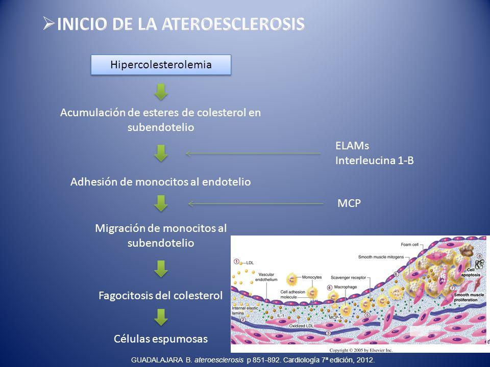 INICIO DE LA ATEROESCLEROSIS