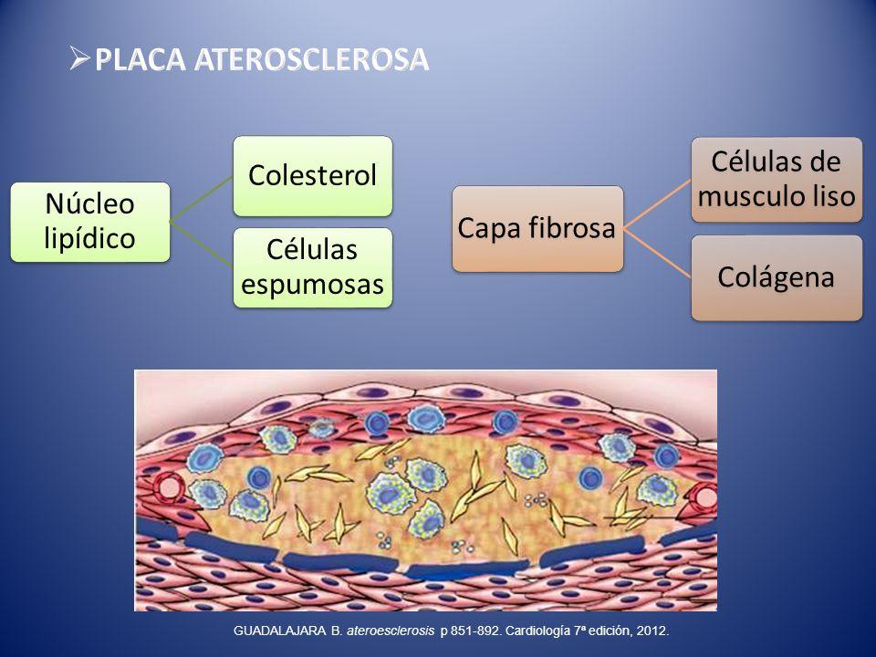 Células de musculo liso